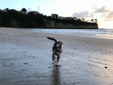 Keira dog beach run