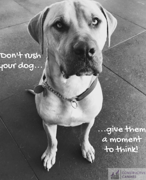 Don't rush your dog - mastiff